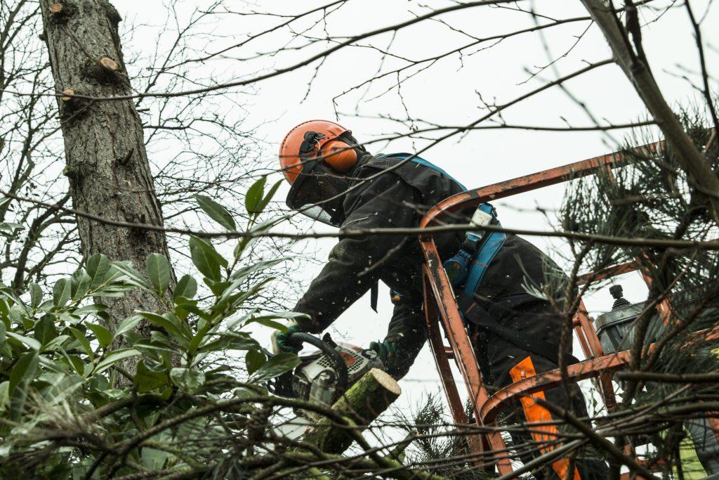 Bomen zagen en snoeien op grote hoogte - Pieter Luiten